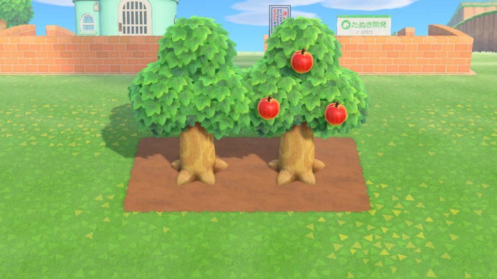 道路を利用した果樹園・花壇つくり3