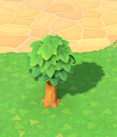 木の成長-若木S