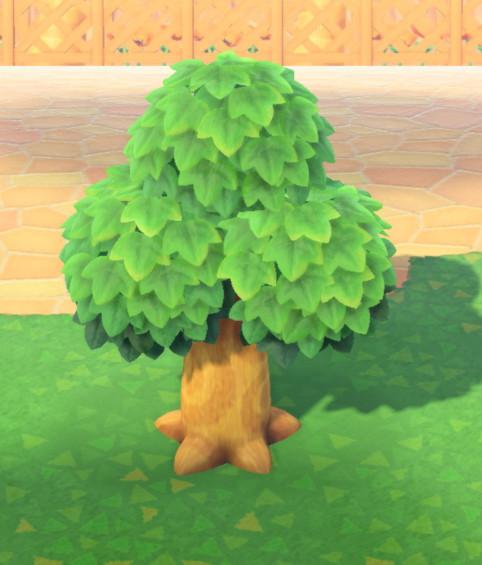 木の成長-若木L
