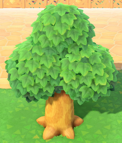 木の成長-成木