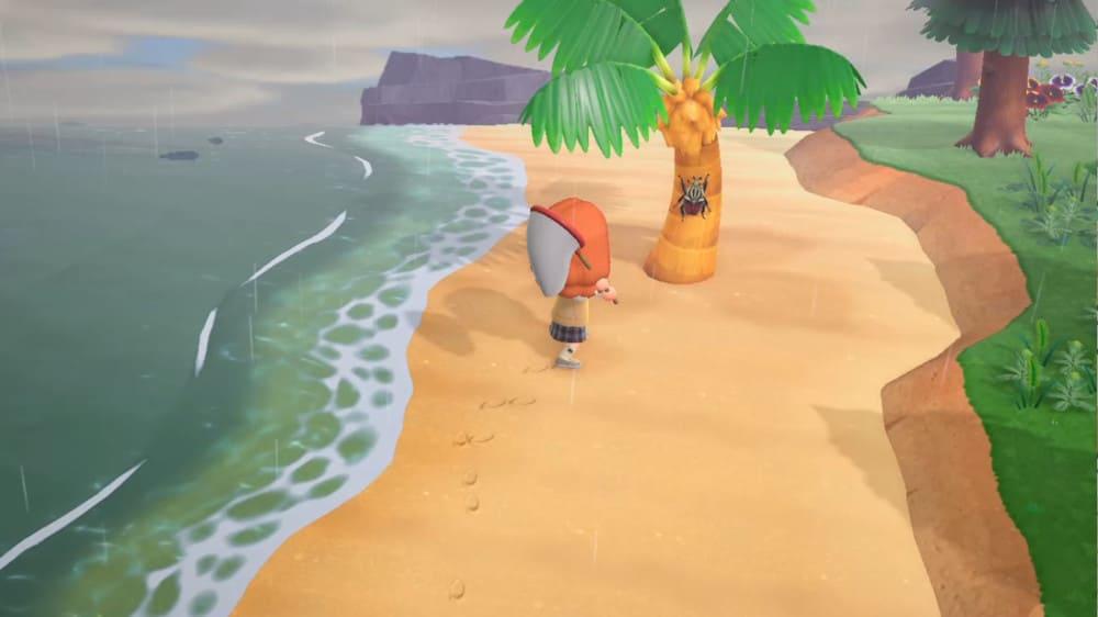ゴライアスオオツノハナムグリを捕まえる距離