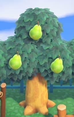 森 方 集め あつ フルーツ