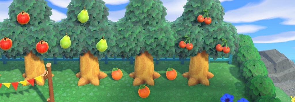 フルーツを収穫する