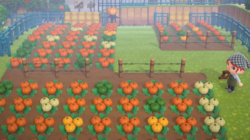 オレンジのかぼちゃの確率が高い